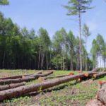 Brazil's Environmental Policy: Environmentalists fear rampant deforestation as Brazil's Bolsonaro eyes new policy