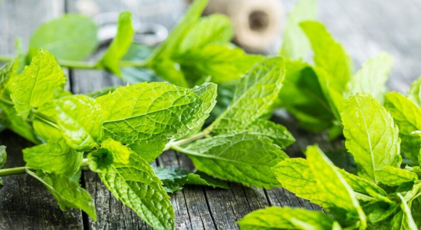 Mint Leaves : Here are amazing health benefits of herbs