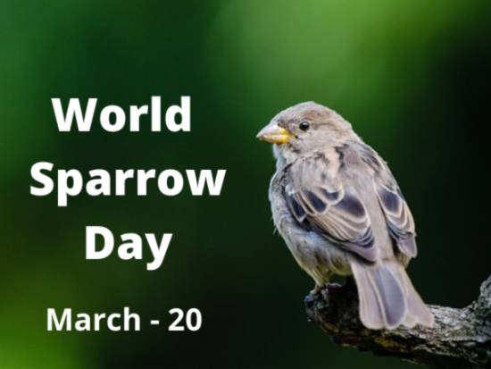 World Sparrow Day 2021: Know theme, Why and How to celebrate this day