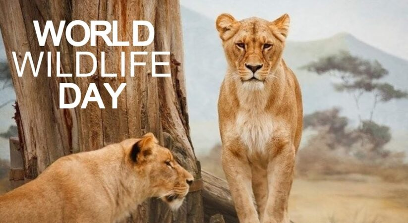 World Wildlife Day 2021 : Here's everything you require to know about this day