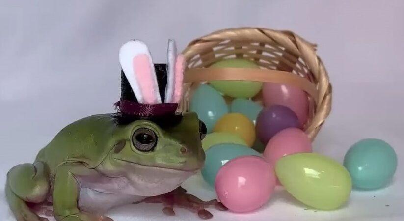 Cadbury declares 2021 'Bunny' as Betty the frog from Florida